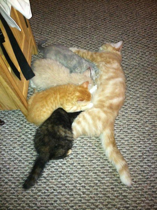 Sassique & Momo kittens, 2011