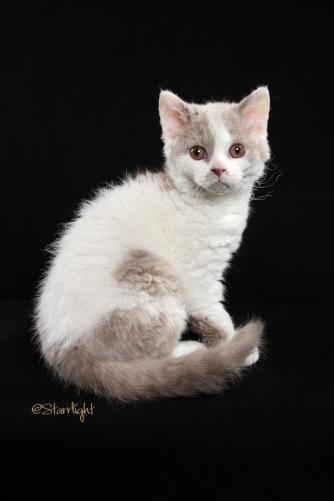 Mushu x Momo kittens