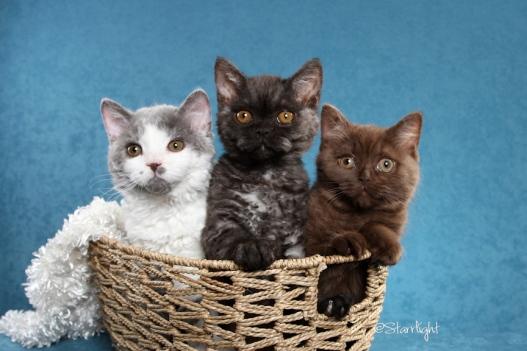 Momo x Mushu kittens