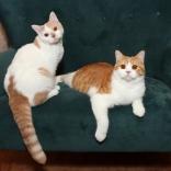 Tye and Tucker, pets of Emma Grossman