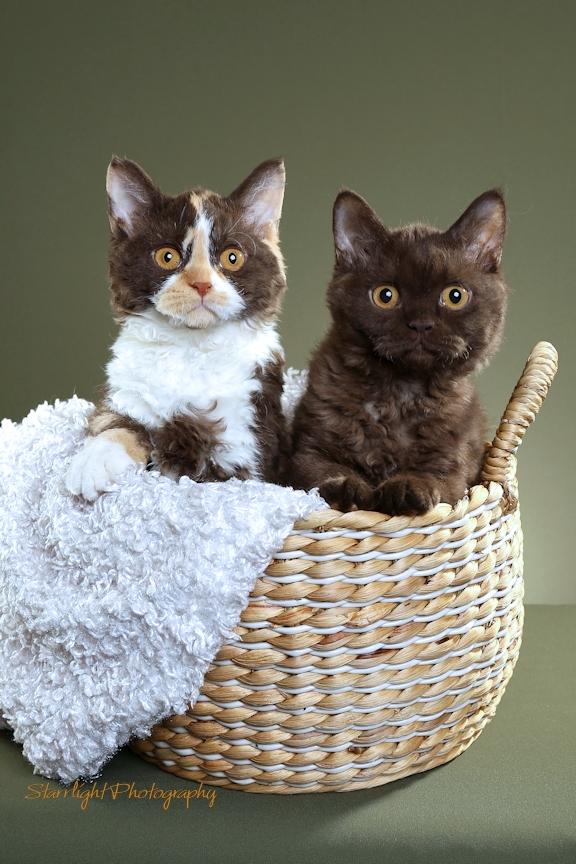 Susens Cats Rhonda and Mona