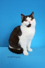 Susens Cats S'more (pet owned by Gloria Mahan)